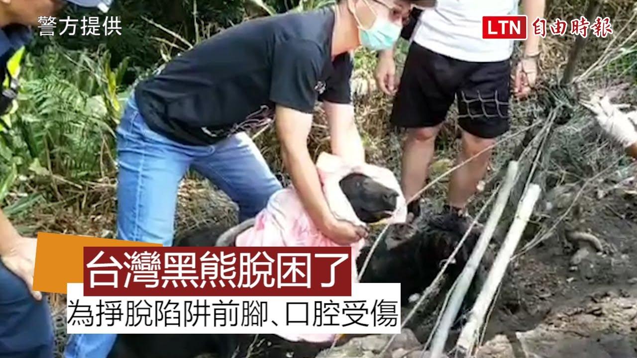 東卯山台灣黑熊脫困了! 前腳、口腔受傷(警方提供)