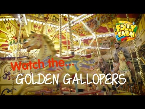 The golden gallopers at Folly Farm