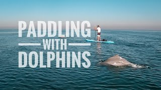 Stand Up Paddling with Dolphins - Al Bahya, Abu Dhabi