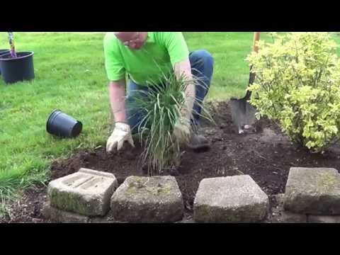 How to Plant an Ornamental Grass
