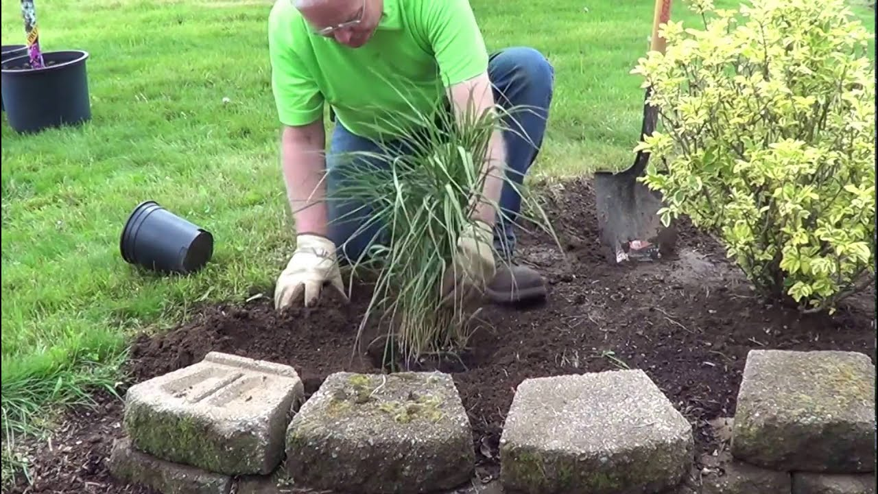 How to Plant an Ornamental Grass YouTube
