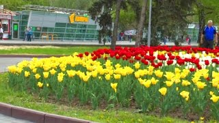 видео Турбазы, гостиницы Волгограда. Квартиры посуточно в Волгограде. Достопримечательности Волгограда и Волгоградской области