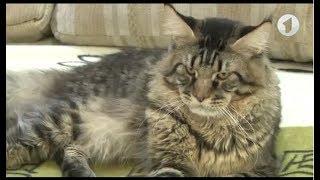 Экзотические кошки: мейн-кун или сфинкс? / Утренний эфир