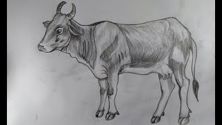 How to Draw a  cow with pencil step by step for beginneras