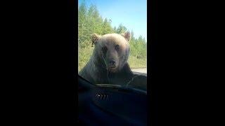 Русский медведь русская душа / Bear / приколы