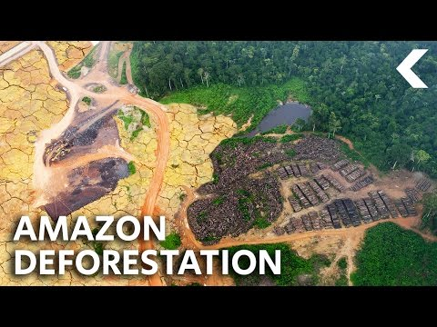 What Ever Happened To Saving The Rainforest?