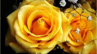 DOLLY PARTON - YELLOW ROSES.wmv