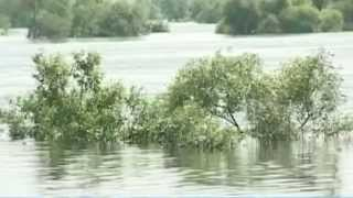 Затопило Далекий Схід. Потоп в Амурській області (історичний максимум) в Хабаровському краї