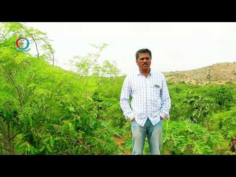 Natural Farming | Software Engineer turns a Successful Farmer | MALLIKARJUN -1
