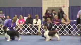 Best In Show - 2014 Flushing Spaniel Show