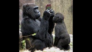 Приколы с животными - забавные обезьянки | new crazy animals 65