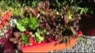 Four Season Garden #4: Planting Lettuce in an EarthBox