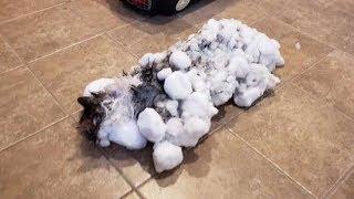 В ветклинике спасли кота, едва не замерзшего насмерть в снегу