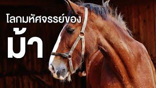 สารคดี สำรวจโลก ตอน ความมหัศจรรย์ของม้า