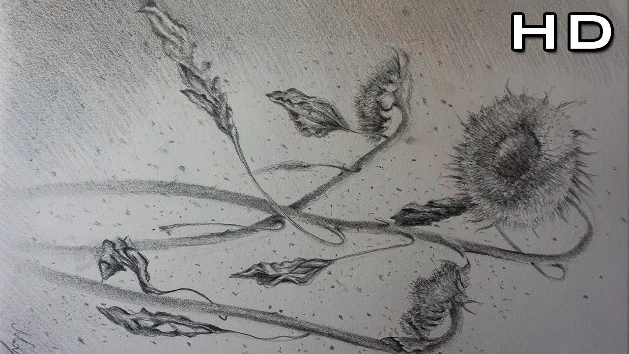 Dibujando Naturaleza muerta Dibujo de un Girasol a Lpiz  YouTube