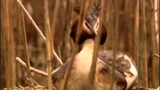 Vie sauvage dans les roseaux - Documentaire animalier