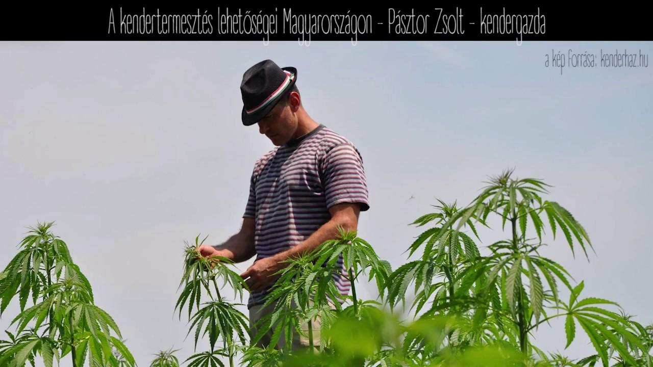 együttes kezelés marihuánával