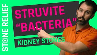 Struvite Kidney Stones: The Bacteria-Based Stone