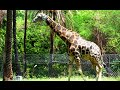 NEHRU ZOO HYDERABAD - HD Video - Complete Coverage 音乐视频片