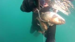 подводная охота Черное море горбыли