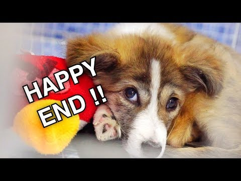 Happy end! Beautiful dog was attacked and left for dead, but there was hope