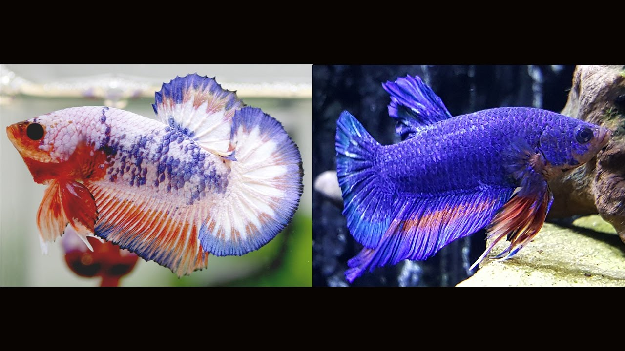 Betta Changed Colors And New Plants Youtube
