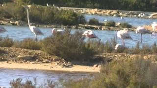 Ses Salines - Salt,white Gold & beautiful Nature (Mallorca) HD