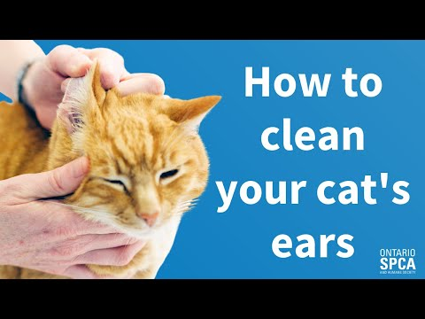 Pet Tips: How to clean your cat's ears