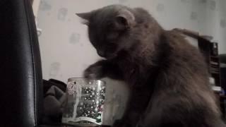 Мой кот не умеет пить воду.