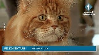 Виставка котів