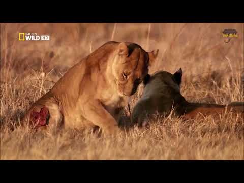 National Geographic: Life on the African Savanna 2017