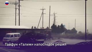Тонны морского гребешка выбросило на южный берег Сахалина