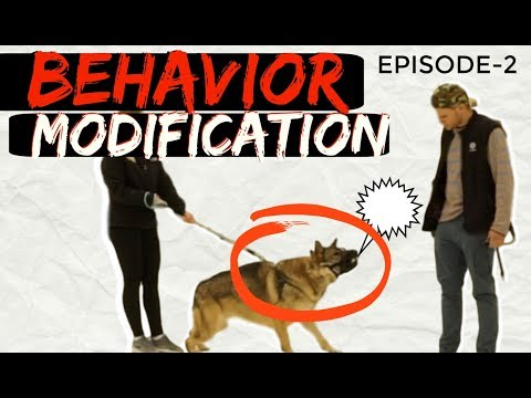 Behavior Modification with a fearful Aggressive German Shepherd Part 2