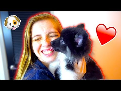 Thumbnail: SURPRISING MY GIRLFRIEND WITH A PUPPY! *SHE CRIED*