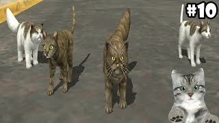 Cat Sim Online: Play with Cats -Update- Android / iOS - Gameplay Episode 10