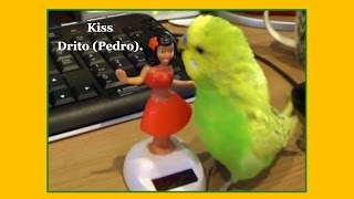 PLAYTIME - Pedro Video #6 - Liz Kreate