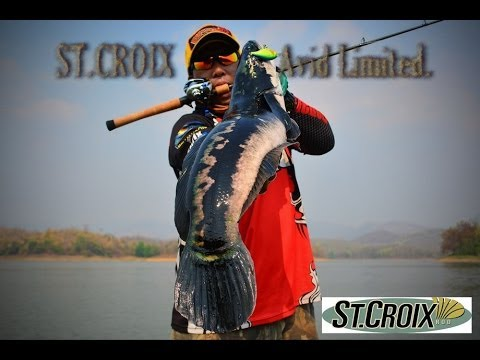 ST.CROIX Avid Limited Action...Giant Snakehead fish.