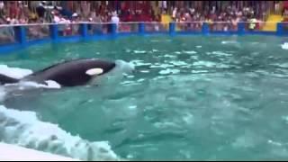 Дельфинарий ( касатка)