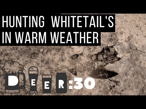 How To Hunt Whitetails In Warm Weather