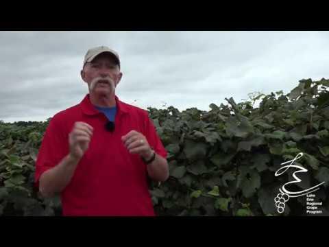 Pre-Harvest Pest Control - LERGP Podcast #85