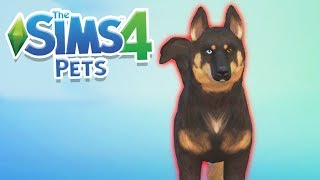 LARK JOINS THE FAMILY! | Sims 100 Cats & Dogs Challenge #5