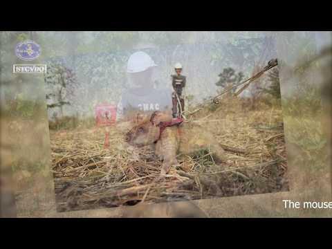 Landmines Cambodia   Visit Landmines field in Cambodia