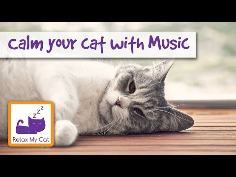 How To Calm Down Your Cat with Music
