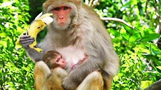 wild monkey eating banana cute pets and animals compilation