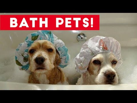 Funniest Pets Taking Baths Home Videos of 2017  Compilation   Funny Pet Videos