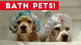 Funniest Pets Taking Baths Home Videos of 2017  Compilation | Funny Pet Videos