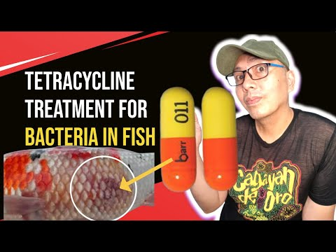 Tetracycline For Fish That Will Make You Treat  A Bacterial Infection