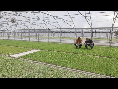 2017 Agricultural Environmental Award :: Speedling