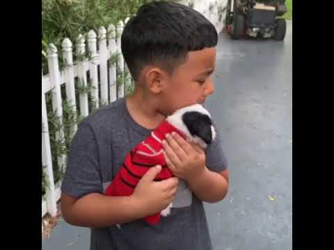 Joey Brooks - Adorable Little Boy Sobs When Given Puppy as Birthday Present