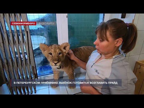НТС Севастополь: «Хорошие новости» от 10 декабря 2020 года